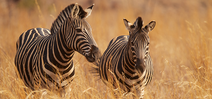 10 African Safaris That Will Change Your Life